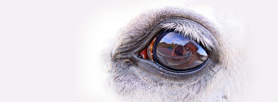 Horse-Eye1