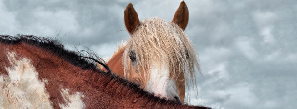 Horse-Hide
