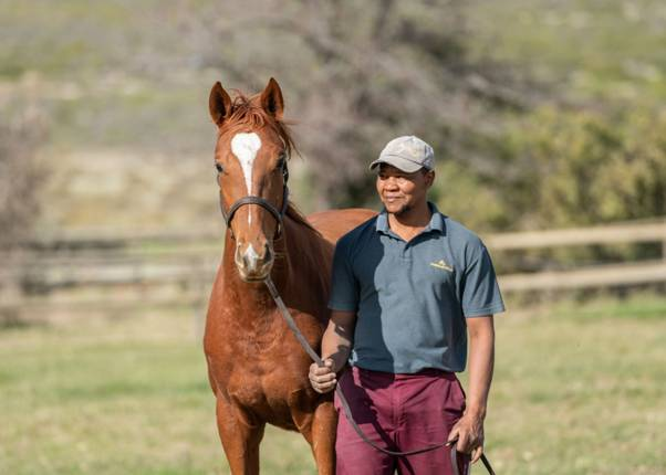 CEEPSA: Celebrating the highest qualified equine stable yard managers in the Thoroughbred stud industry in South Africa